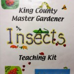 Insects Teaching Kit