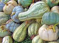 2017 October MGFKC eNewsletter - squash
