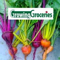 Growing Groceries - Beets in Color