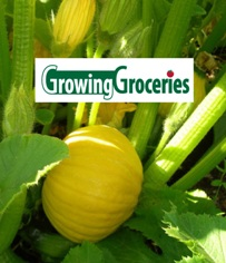 Growing Groceries - Winter Squash