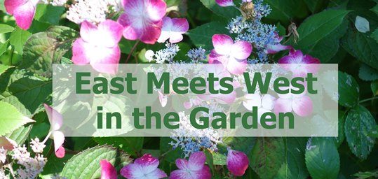 East Meets West in the Garden